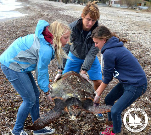 strandedturtle-samos-Dec12-web