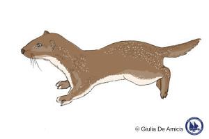Mustela nivalis_Least weasel_Giulia De Amicis
