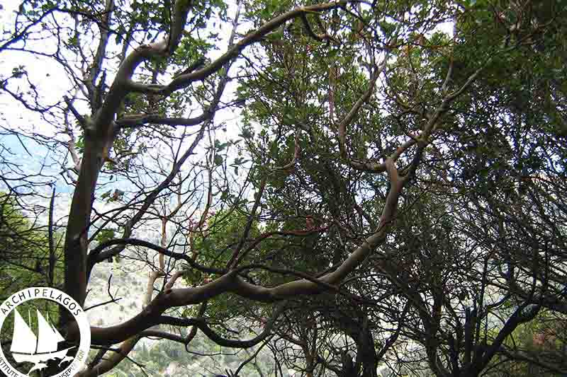 Ranti forest (1)
