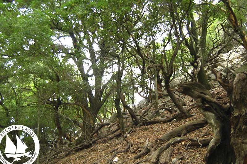 Ranti forest (2)