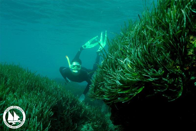 poseidonia-snorkeling