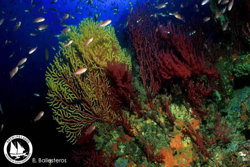 Coralligene-reefs
