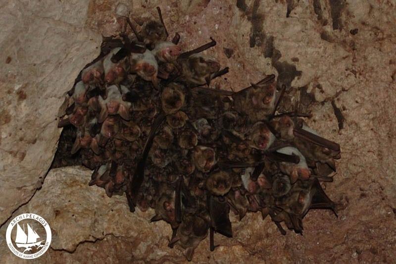 bats-3