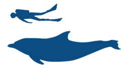 Common Bottlenose Dolphin Icon (1)