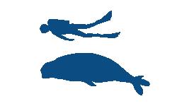 Mediterranean Monk Seal (1)