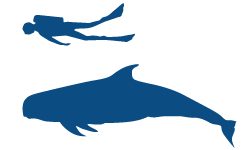 Risso's Dolphin Icon (1)
