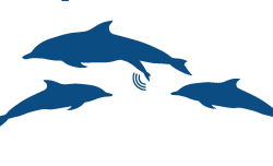 Short-beaked Common Dolphin Icon (6)