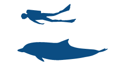 Striped Dolphin Icon (1)