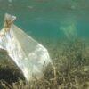 «Οι Επιπτώσεις των Υδατοκαλλιεργειών στα Παράκτια Νερά» στη Συνεδρίαση της Επιτροπής Προστασίας Περιβάλλοντος της Βουλής