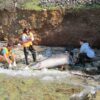 This is the 17th dolphin that has been found dead at the same time in the wider region of the Aegean