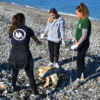 Strandings of Rare Species on the Shores of the Aegean
