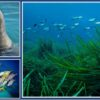 Discovering the Fascinating Marine World of the Aegean Sea – A webinar for young people of all ages!