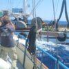 Προκλητική, Καταστροφική και Παράνομη Αλιεία από 6 Τουρκικές Μηχανότρατες κοντά στις ακτές της Λέρου