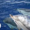 Marine Mammal Behaviour Research