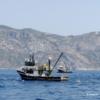 Προκλητική & Καταστροφική Αλιεία από Τουρκικές Μηχανότρατες στα Ελληνικά Νερά