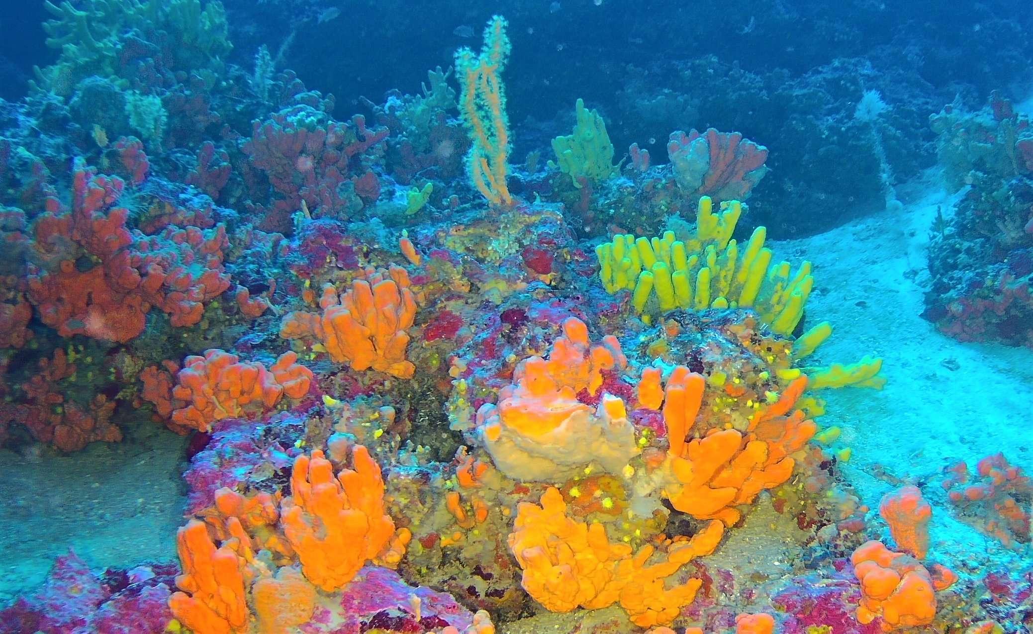 Coralligene Conservation